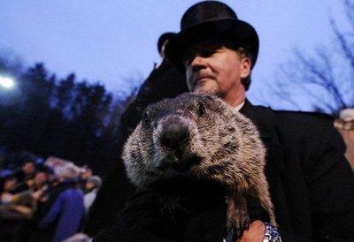 Damn groundhog
