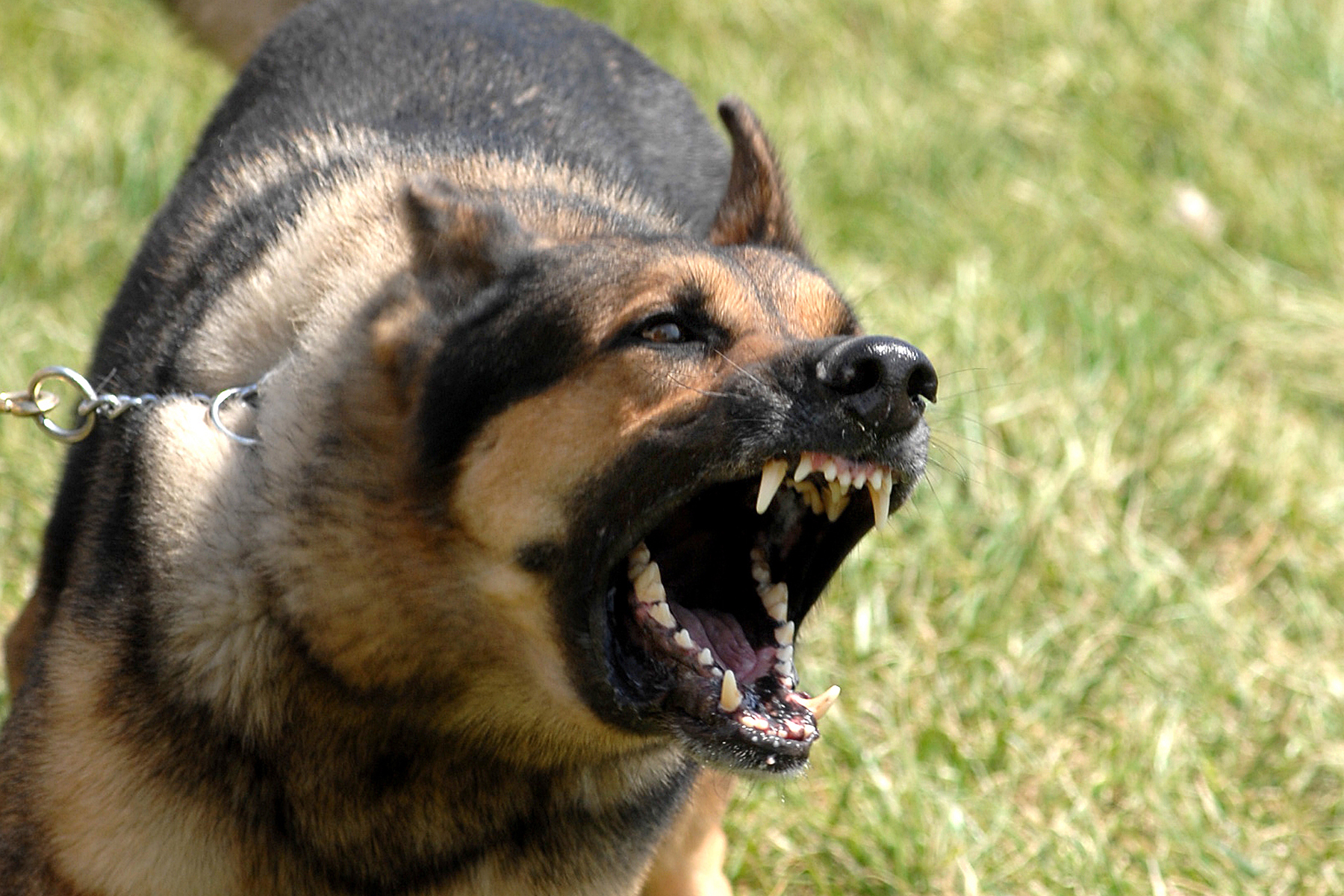 A barking dog issue becomes a soapbox for intolerance