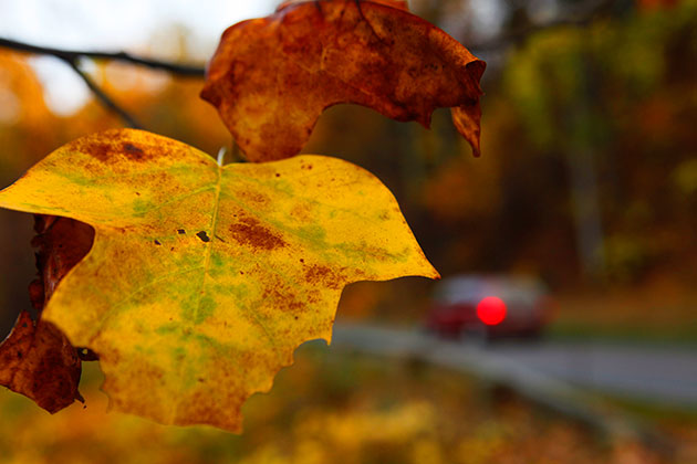 Cooler weather, not much rain ahead