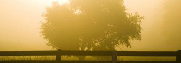 The fog of morning