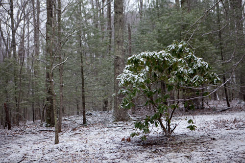 Another Ma. Nature snow job