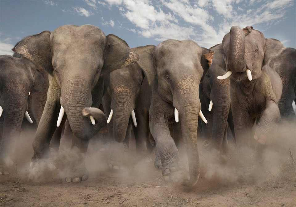 Floyd County elections are elephant stampedes