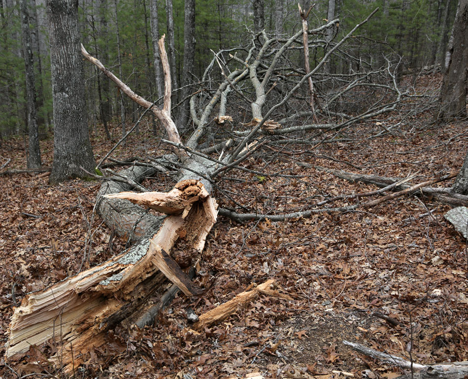 Wind howled, tall tree broke in half